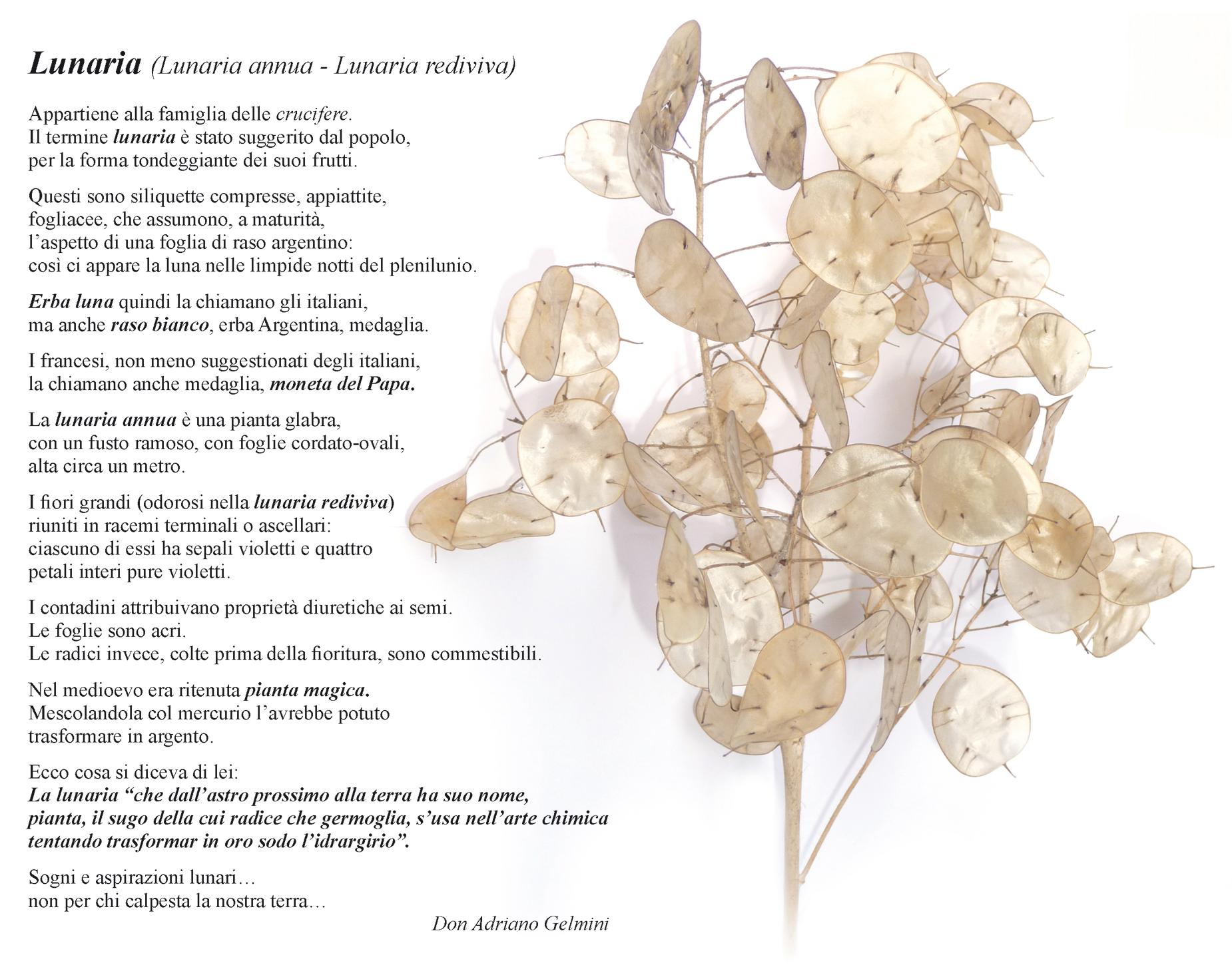 Testo-e-Lunaria